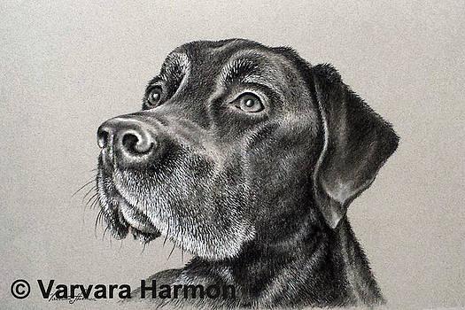 Josh by Varvara Harmon
