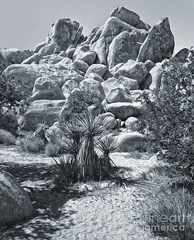 Gregory Dyer - Joshua Tree - 09