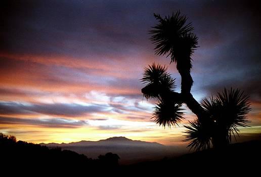 Joshua Tree at sunset by Jetson Nguyen