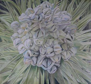 Joshua Tree Bloom by Sandra Lytch