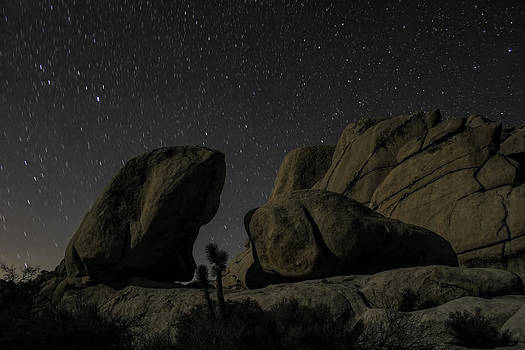 Joshua Tree Night Light by Daniel Caron