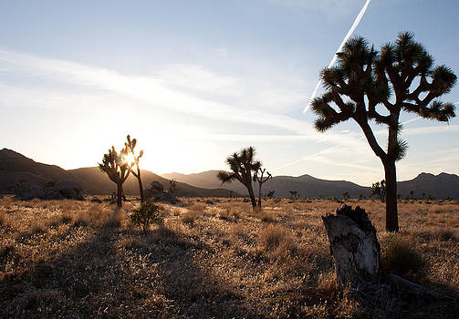 John Daly - Joshua Tree Setting Sun