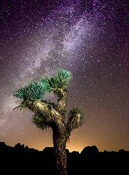 Joshua Tree Vs the Milky Way by Robert  Aycock