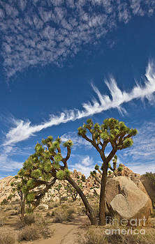 Yva Momatiuk and John Eastcott - Joshua Trees  in Joshua Tree Natl Park