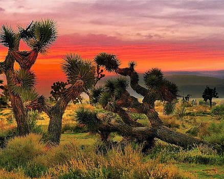 Joshua Trees by Ludmila Nayvelt