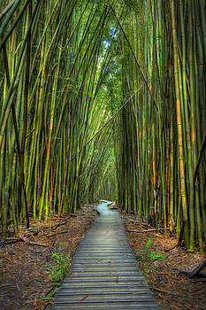 Journey by Hawaii  Fine Art Photography