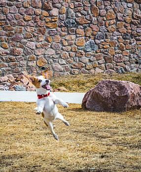 Joyful Jumper by Miki  Finn