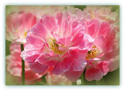 Rosanne Jordan - Joyful Spring Tulips