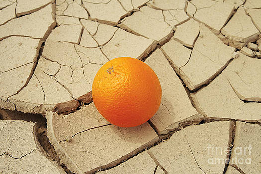 Juicy orange and drought. by Alexandr  Malyshev