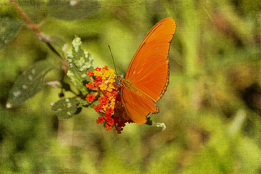 Peggy Collins - Julia Butterfly and Lantana Flowers
