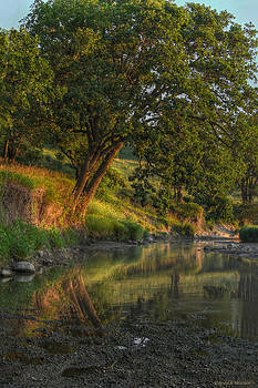 July Morning along the Creek by Bruce Morrison