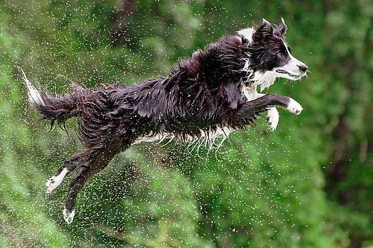 Jump and Splash by Robert Hainer