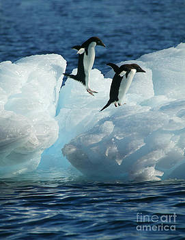 Jumping penguins by Rosemary Calvert