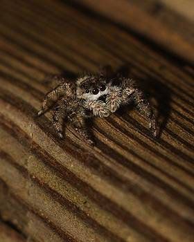 Billy  Griffis Jr - Jumping Spider 2
