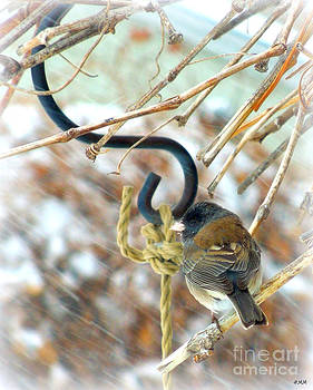 Junco In Snow Storm by Heidi Manly