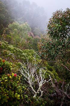 Jungle Foliage in Mist by Tim Newton