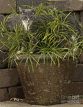 Jungle Kitty All Profits go to Hospice of the Calumet Area by Joanne Markiewicz