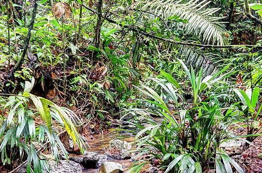 Bob Hislop - Jungle Rain Forest