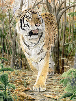 Jungle Tiger by Marshall Bannister