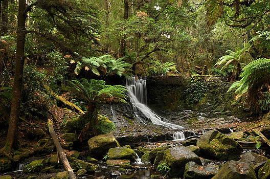 Jungle waterfalls by Tomas Mahring