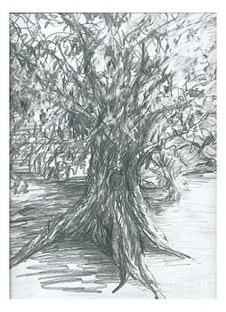 Joseph Wetzel - Juniper Sketch