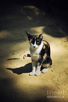LHJB Photography - Just a cat