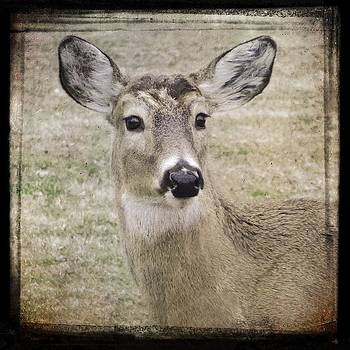 Gothicrow Images - Just A Deer