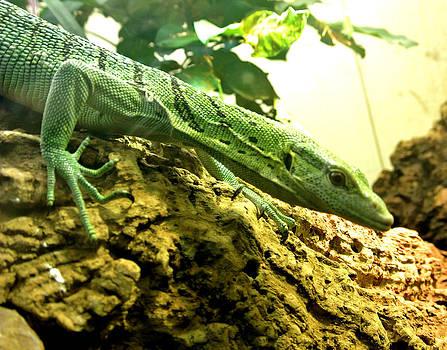Just a Lil Lizard by Amber Davenport
