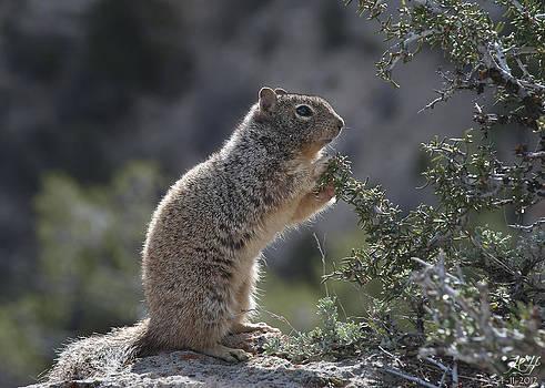 Just a Squirrel by Kenneth Hadlock