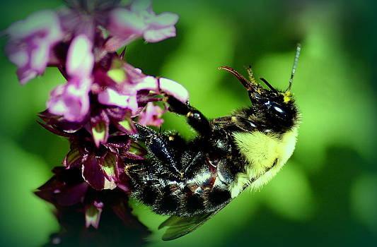 Rosanne Jordan - Just Being a Bee