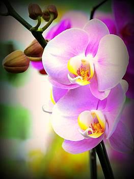 Just Lovely by Silvie Gunawan