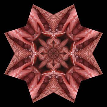 Chris Maher - K4646b Sexual Mandala for Erotic Spirituality