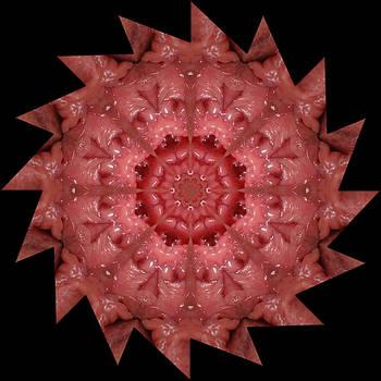 Chris Maher - K4651b Sexual Mandala for Erotic Spirituality