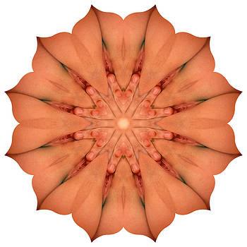 Chris Maher - K9724 Sexual Mandala for Erotic Spirituality