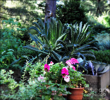 Kale and Geraniums Basking in the Morning Sun by Tanya  Searcy
