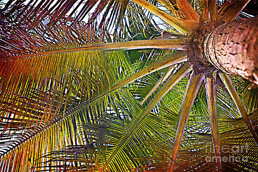 Kaleidescope Palm by A New Focus Photography