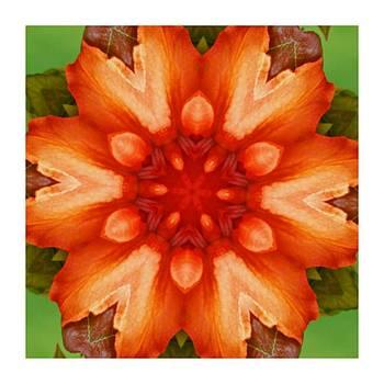 Kaleido Orange Flower by Ck Gandhi
