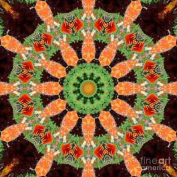 Kaleidoscope abstract butterflies and flowers by Dana Hermanova