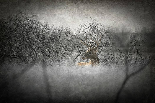 Kansas Buck by Garett Gabriel