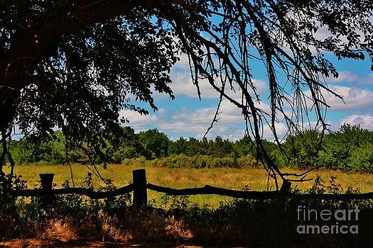Kansas Country Pasture by Robert D  Brozek