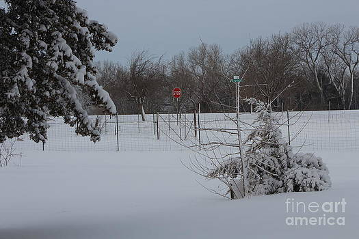 Kansas Snowy Landscape tree's and fence by Robert D  Brozek