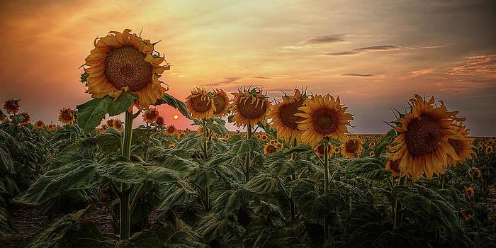 Kansas Van Gogh by Thomas Zimmerman