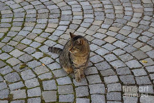 Katze in der Altstadt by Karin Sigwarth
