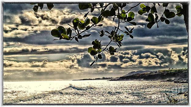 Charles Davis - Kauai eastside evening