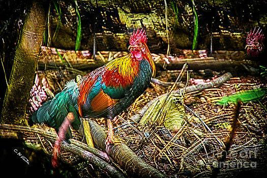 Charles Davis - Kauai Rooster