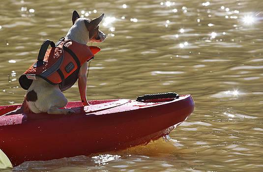 Kayak Jack by Soccer Dog Design