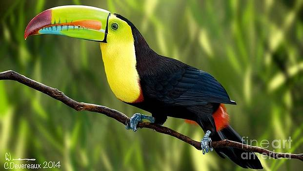 Keel Billed Toucan by Chuck Devereaux Art