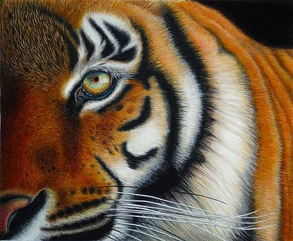Tiger  by Karen Sharp