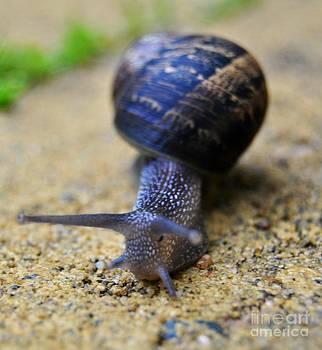Keep walking snail  by Bobby Mandal