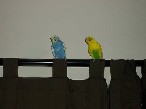 Keets on curtain rod. by Photo Shirts